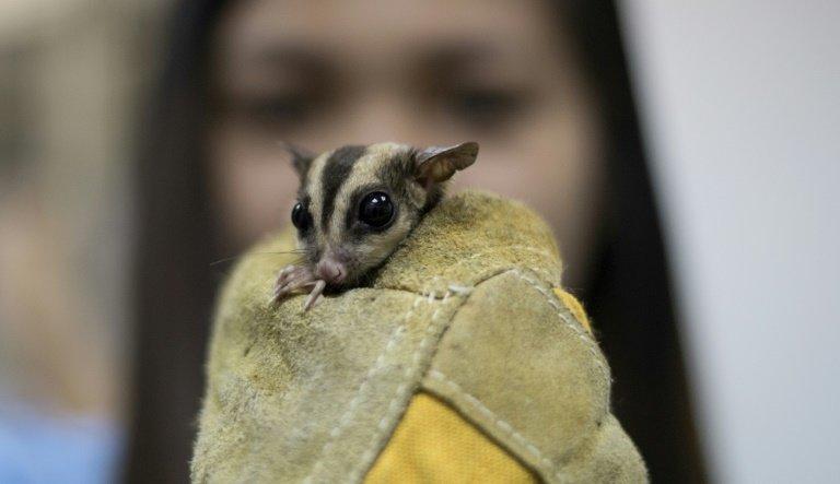 photo image Philippines seizes hundreds of smuggled animals