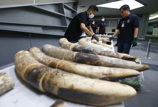 photo image Thailand seizes large elephant tusks worth over $450,000