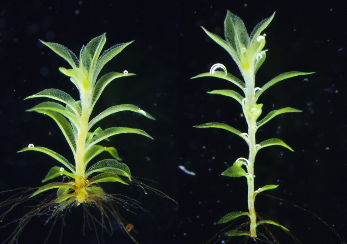 Seed plants all have flagellated sperm