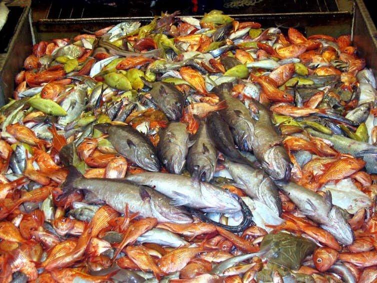 is plenty of fish good