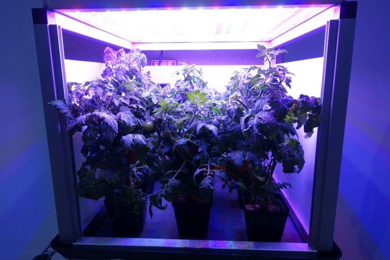 The Challenge Of Space Gardening One Giant Leaf For Mankind