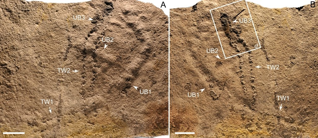 Researchers report the earliest fossil footprints