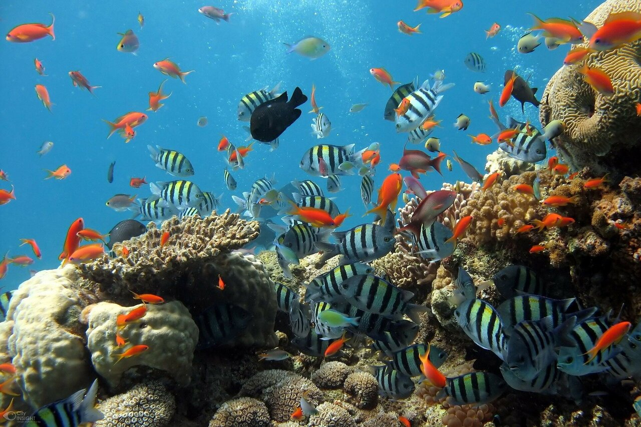 Protect ocean against 'irreversible' changes: Experts call for eight urgent measures