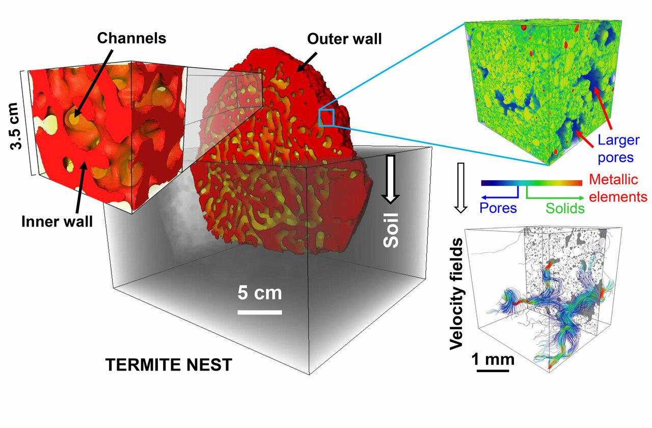 X-rays reveal termites' self-cooling, self-ventilating, self-draining skyscrapers