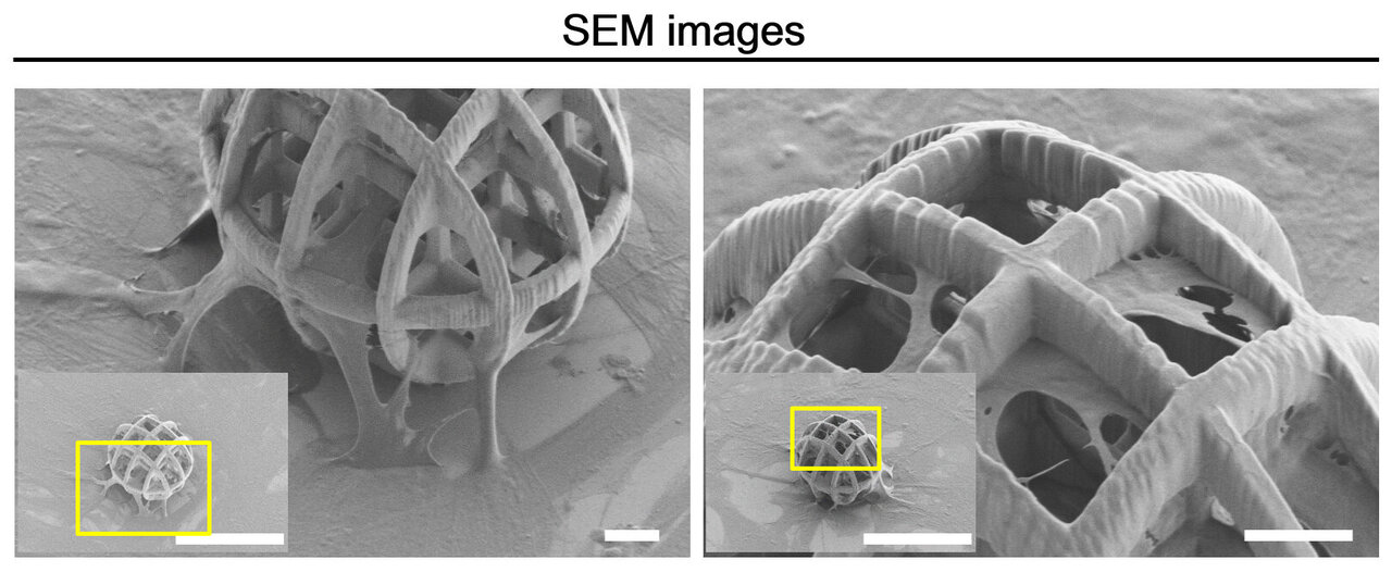 Researchers use magnetically actuated microrobots to deliver stem cells to tissue targets