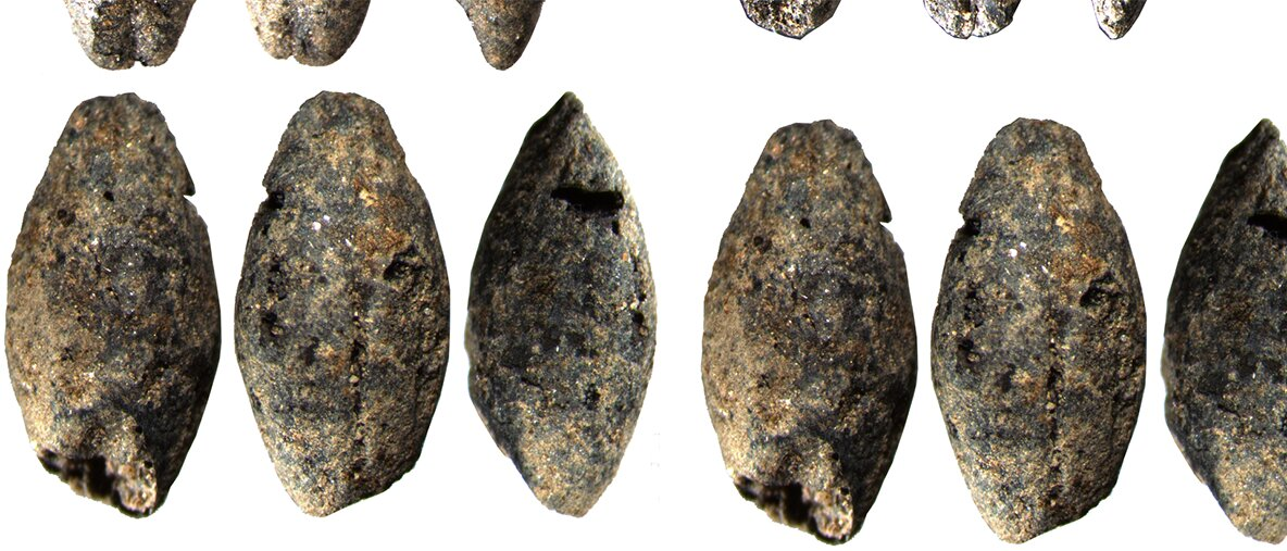 A 5,000-year-old barley grain discovered in Finland changes understanding of livelihoods