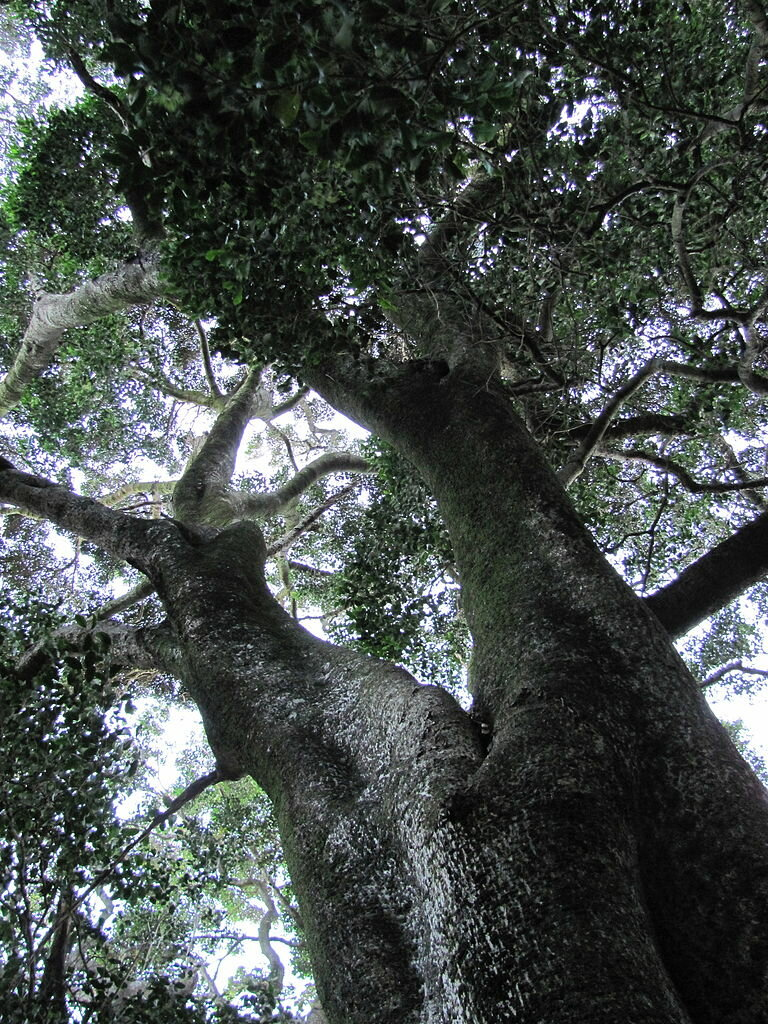 Afromontane forests and climate change