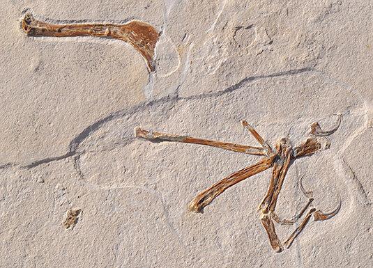 Scientists unearth 'most bird-like' dinosaur ever found