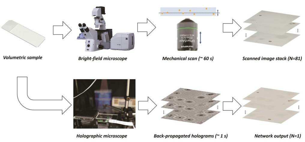Deep learning merges advantages of holography and bright-field microscopy for 3-D imaging