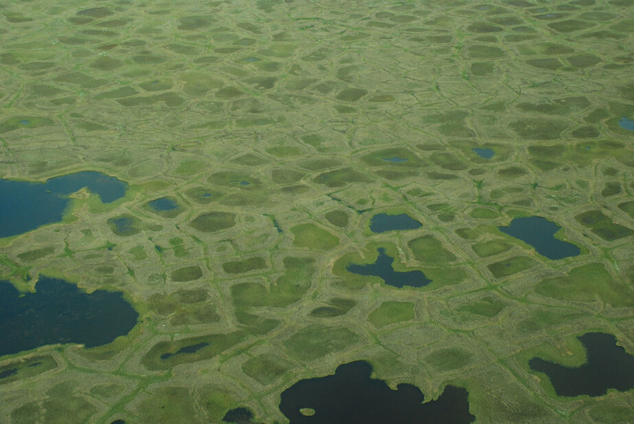Controls on nitrogen nutrient availability in the Arctic tundra