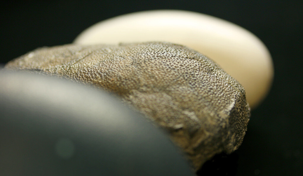 Hue times two: A second look at the color of dinosaur eggs
