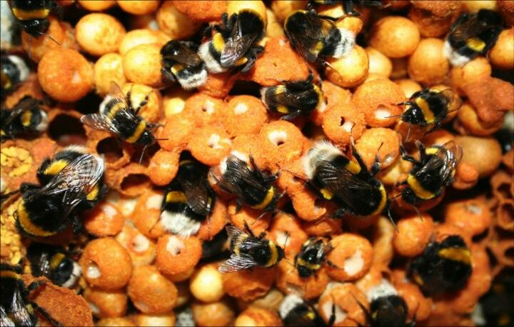 Improved regulation needed as pesticides found to affect genes in bees