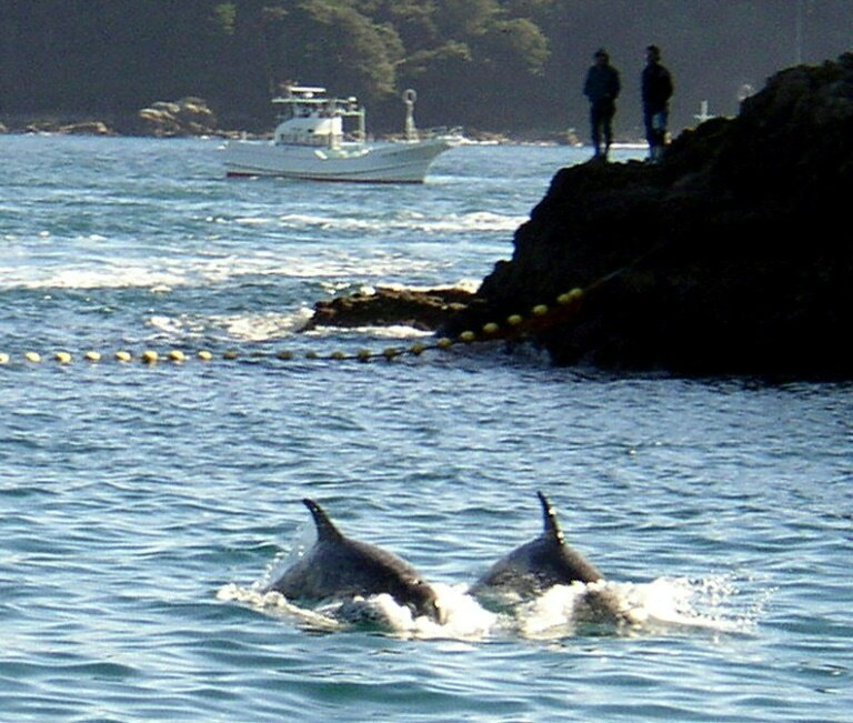 photo image Activists file suit to stop dolphin hunting in Japan