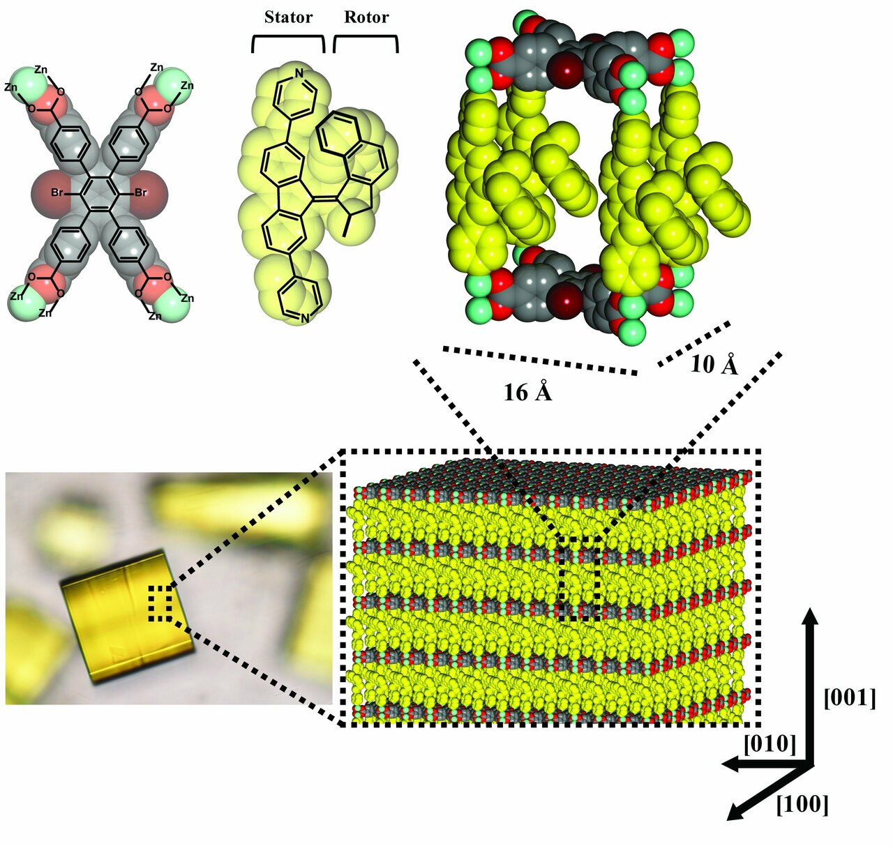Molecular motors run in unison in a metal-organic framework