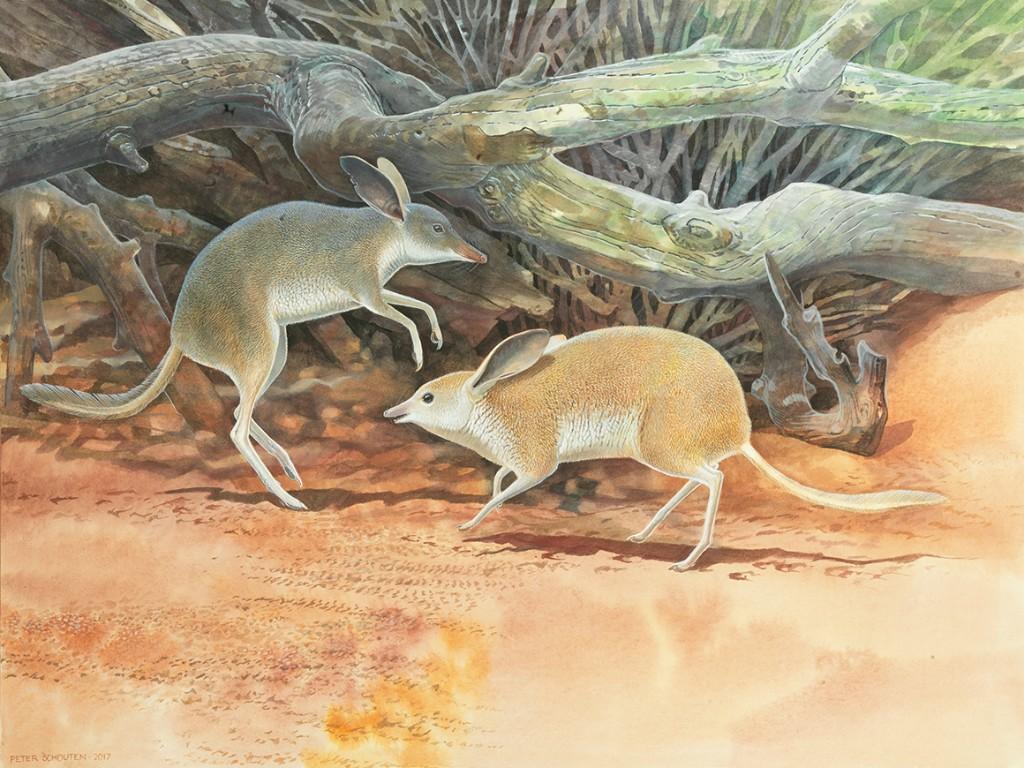Researchers discover new species of extinct Australian mammal