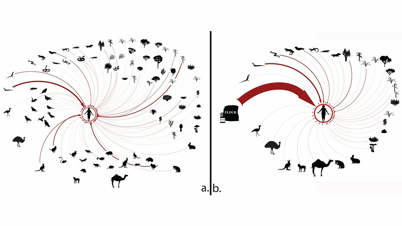 study of human impact on food webs and ecosystems yields