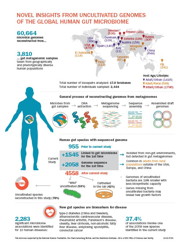 photo image Uncovering uncultivated microbes in the human gut