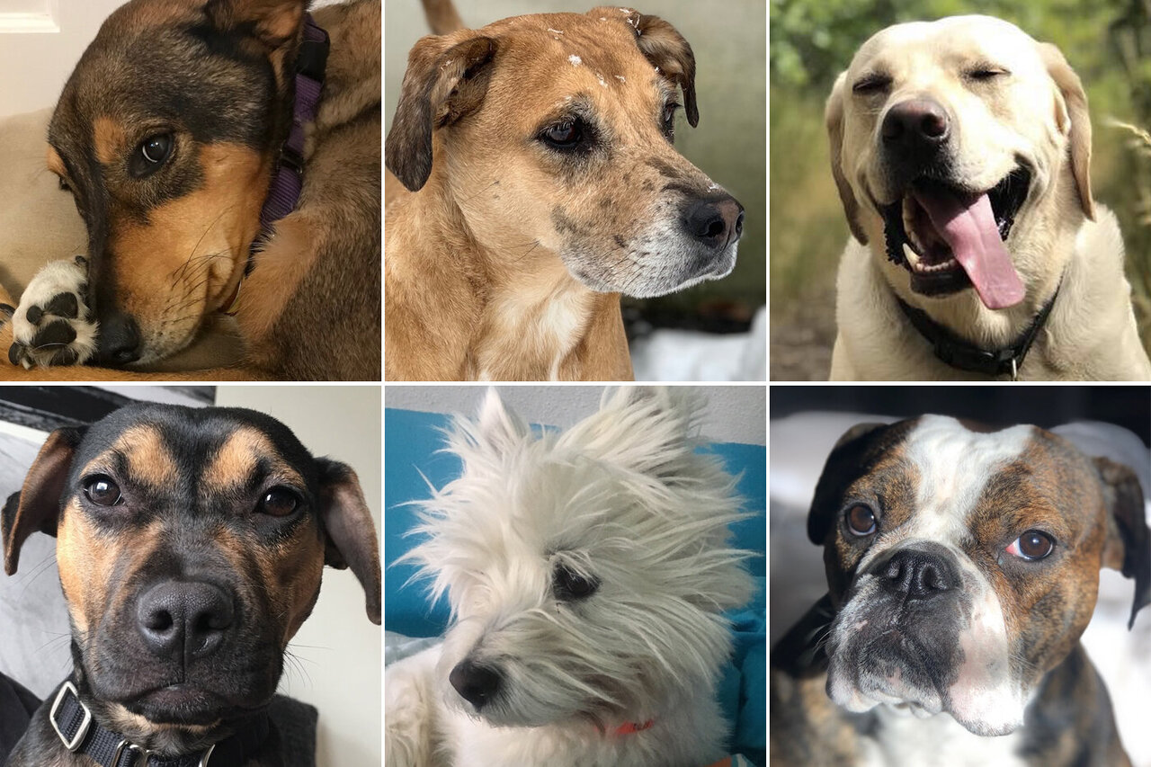 What cute dogs can teach us about democracy