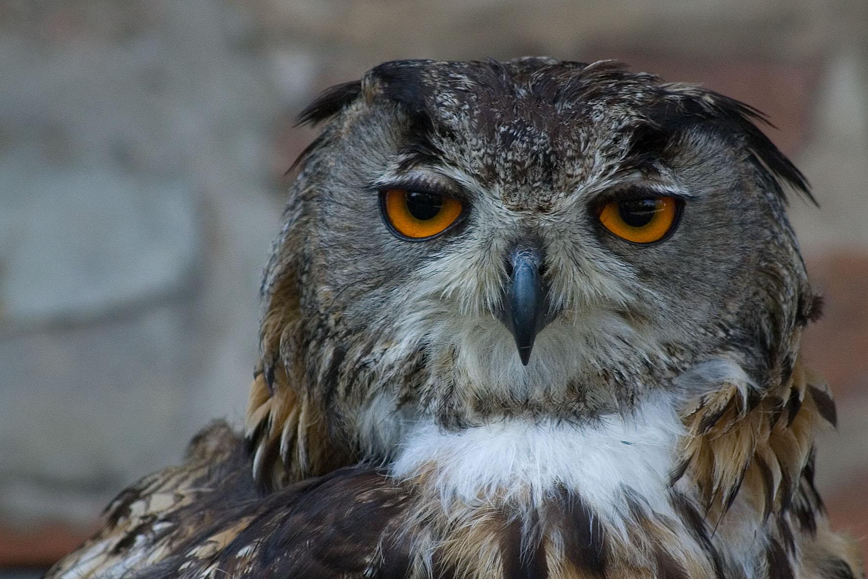 how to make an owl beak