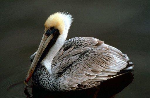 Florida S Everglades Put On World Heritage Endangered List