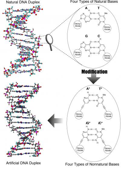 First Dna Molecule Made Almost Entirely Of Artificial Parts