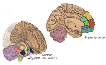 Neuroscientists Identify Brain Regions Responsible for Warding off ...