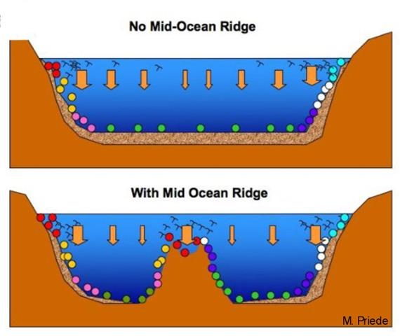 Sunlight explorers census 17650 ocean species between edge of diagram of the mid atlantic ridge sciox Image collections