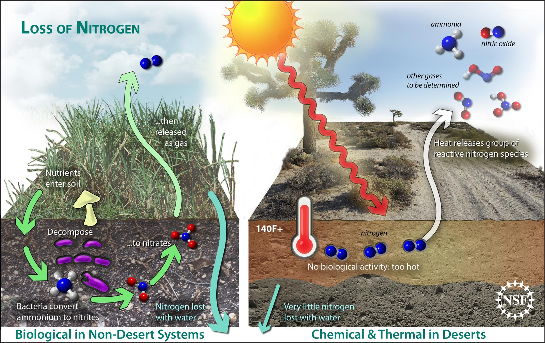 Climate change nitrogen loss threaten plant life in arid for Uses of soil in daily life
