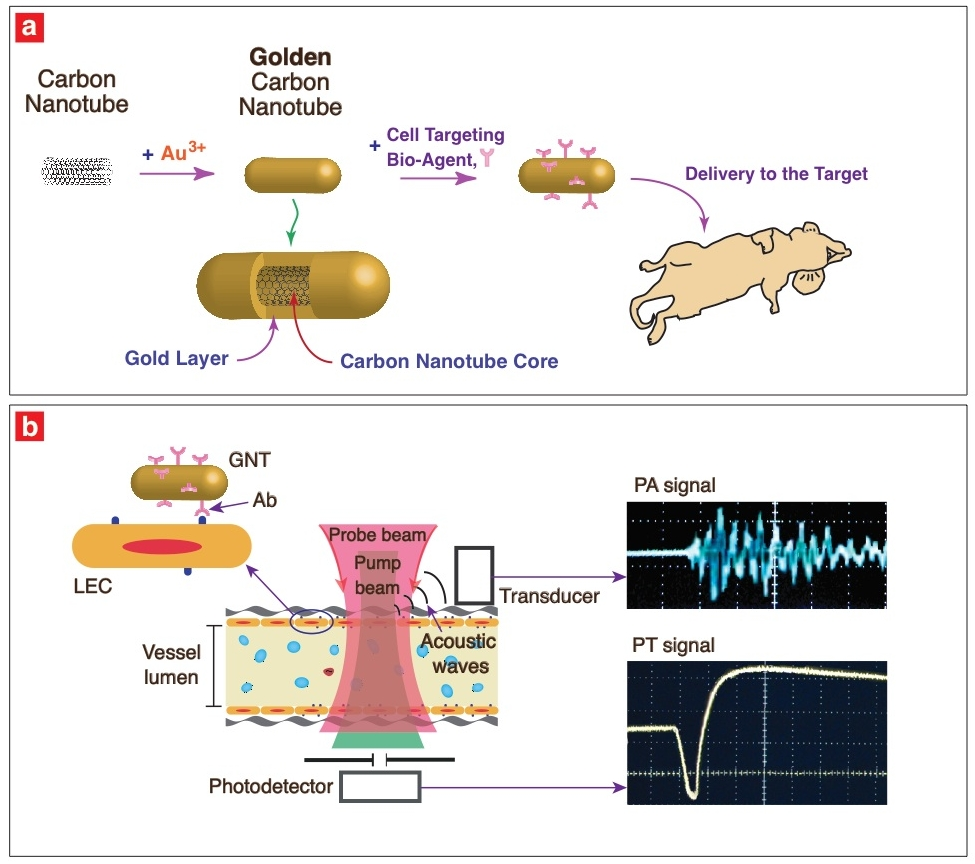 Golden Nanotubes Used For Imaging Agent To Detect Tumor Cells Map