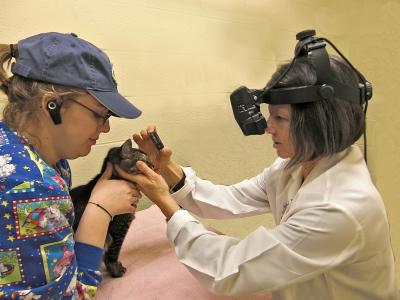Cats Eye Diseases Genetically Linked To Diseases In Humans