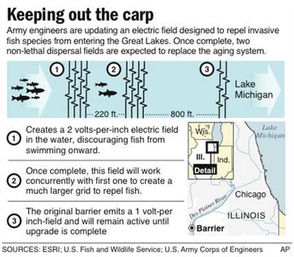 Barrier Asian carp