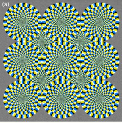 not just your imagination the brain perceives optical illusions as