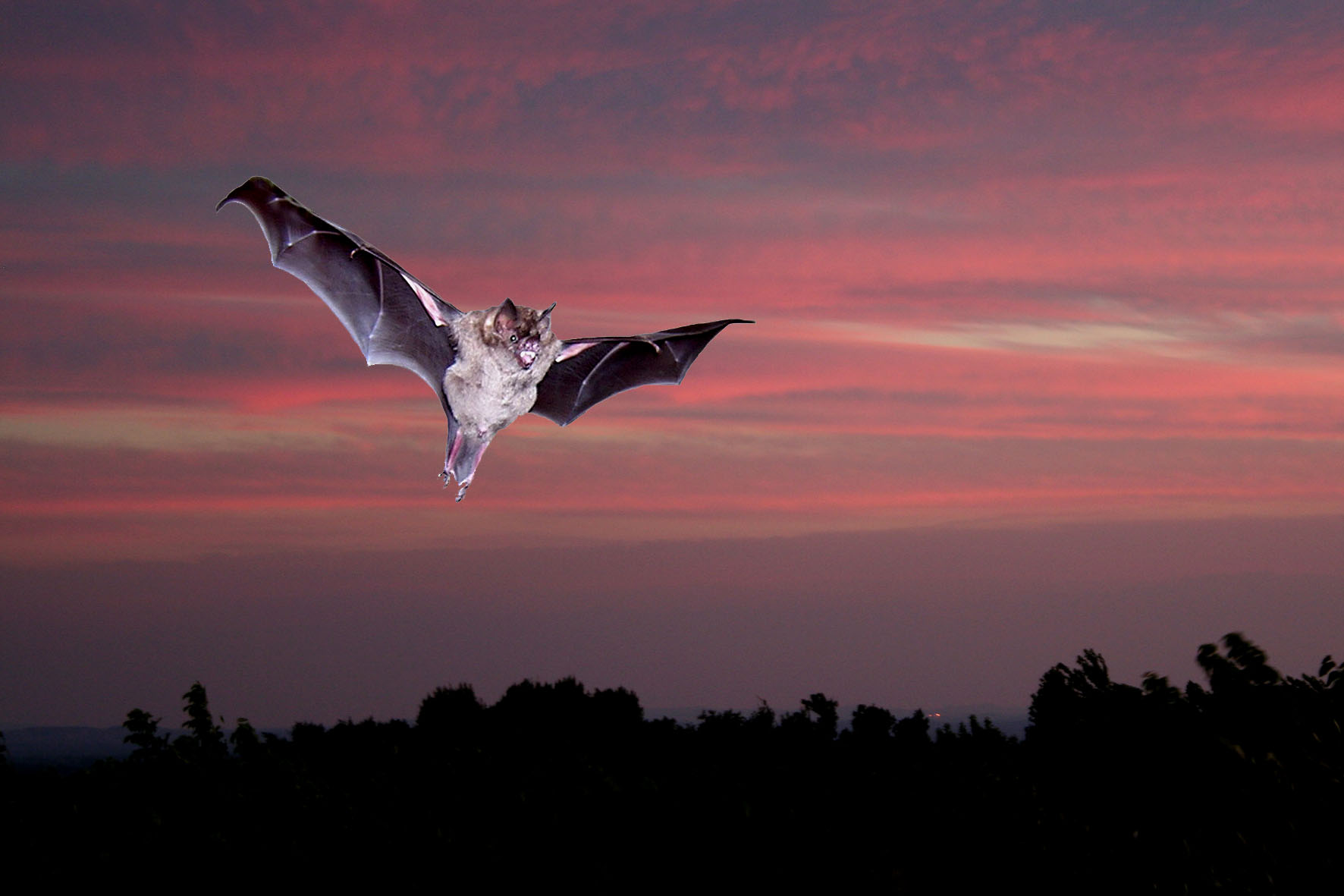 There is more to bats\' vision than meets the eye