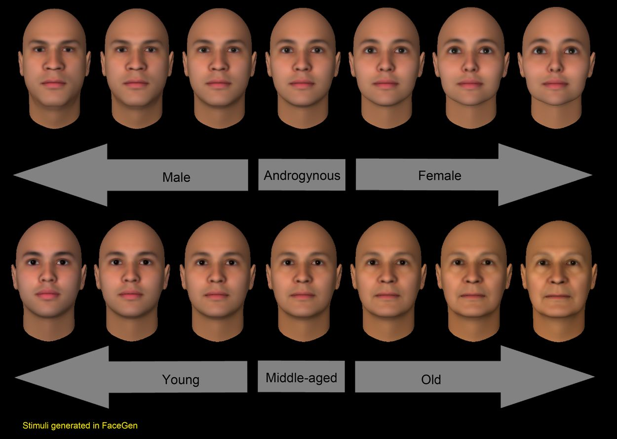 Study Finds That The Same Face May Look Male Or Female -1428