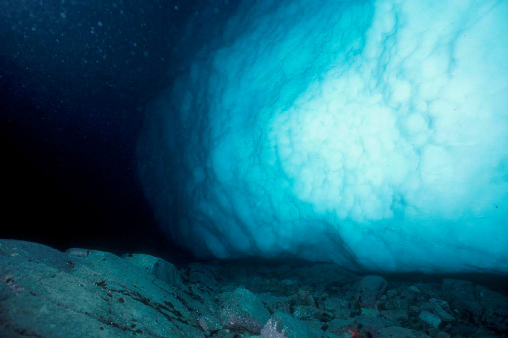 Climate Change Affects Marine Animals On Antarctica's Seabed