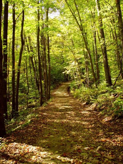 Harvard Forest: Global Warming May Affect The Capacity Of Trees To Store