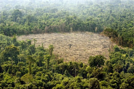 """the issue of mass destruction of rainforests the lungs of the world Most of the tropical rain forests straddle the equator one-third of the world's total is in the amazon basin of brazil rain forests usually experience high humidity and daily rainfall the vast areas of trees have been called the """"lungs of the earth"""" the forests """"breathe"""" by removing ."""