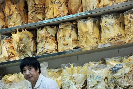 how to prepare dried shark fin
