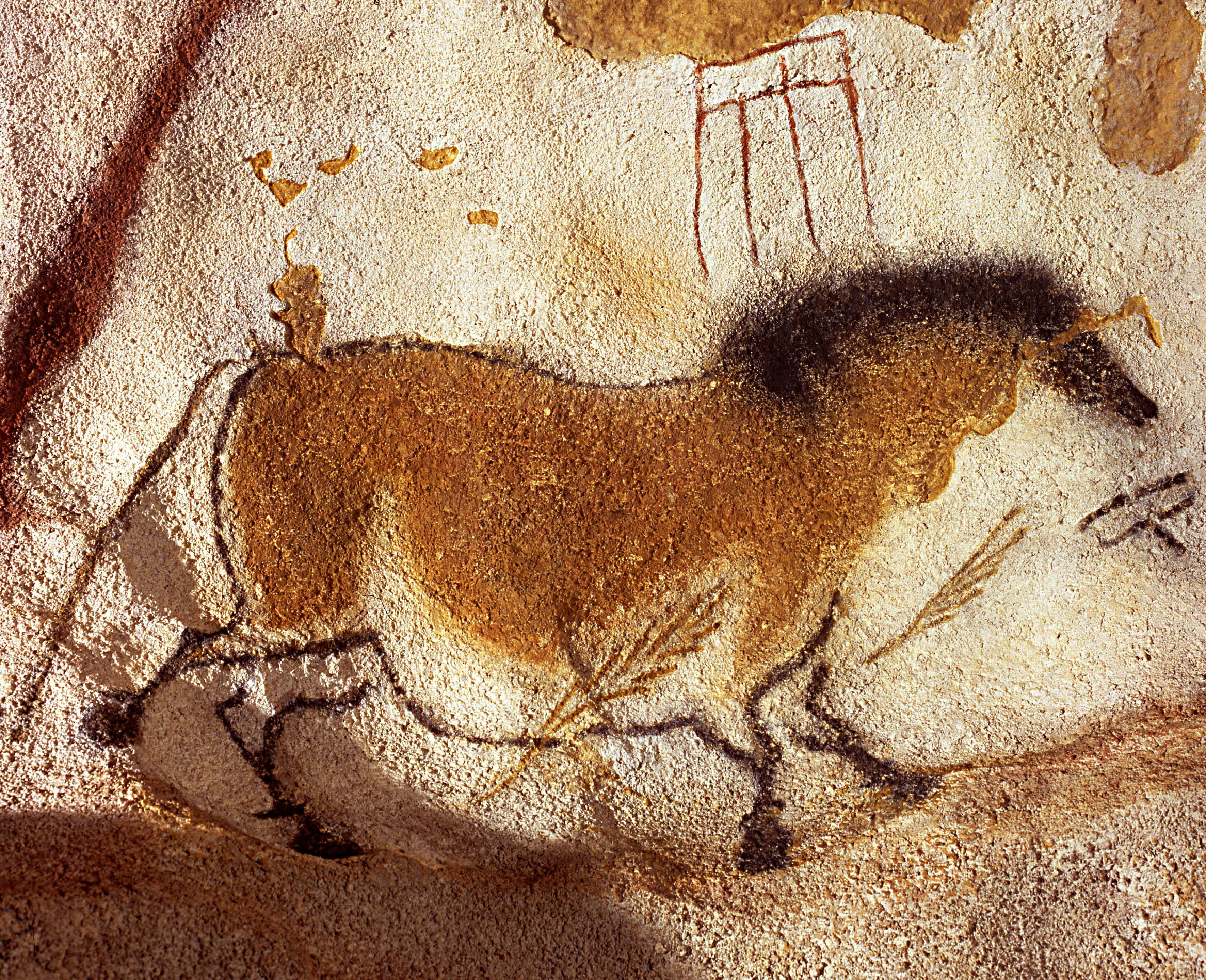 ancient dna provides new insights into cave paintings of horses. Black Bedroom Furniture Sets. Home Design Ideas