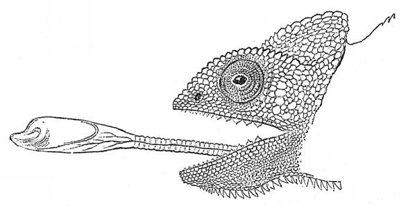 chameleon u0026 39 s ballistic tongue inspires robotic manipulators