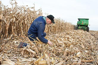 Know how gives wisconsin farmers an edge in growing biomass kevin shinners a uw madison agricultural engineer examines corn stover in a wisconsin field credit wolfgang hoffmann sciox Choice Image