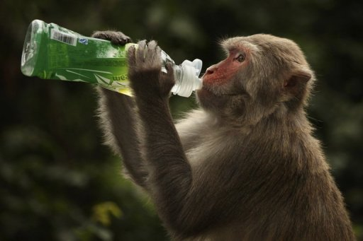 Diseases transmissible from monkeys too many fish dating site