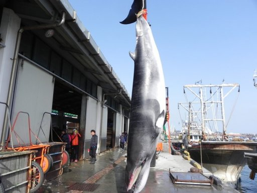 S. Korea formally dumps 'scientific' whaling plan