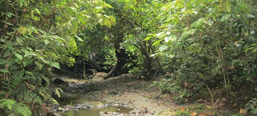 protects tropical rainforests from drought