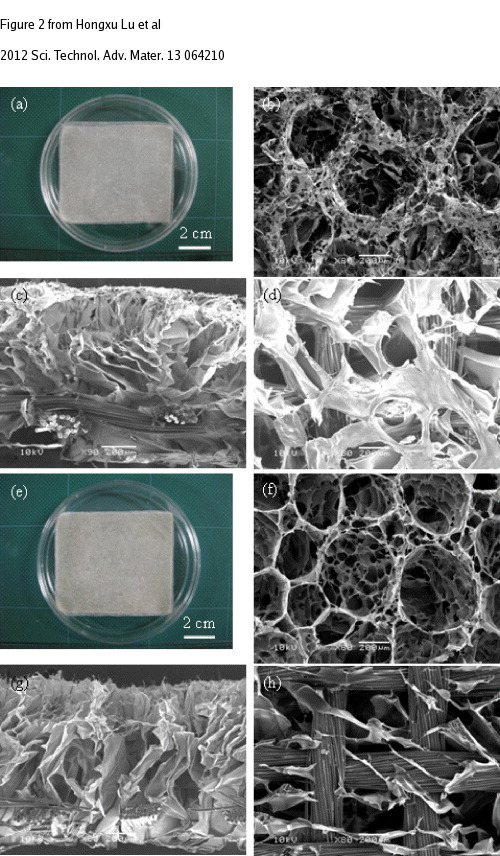 Researchers Develop Hybrid Scaffold Potential For Future