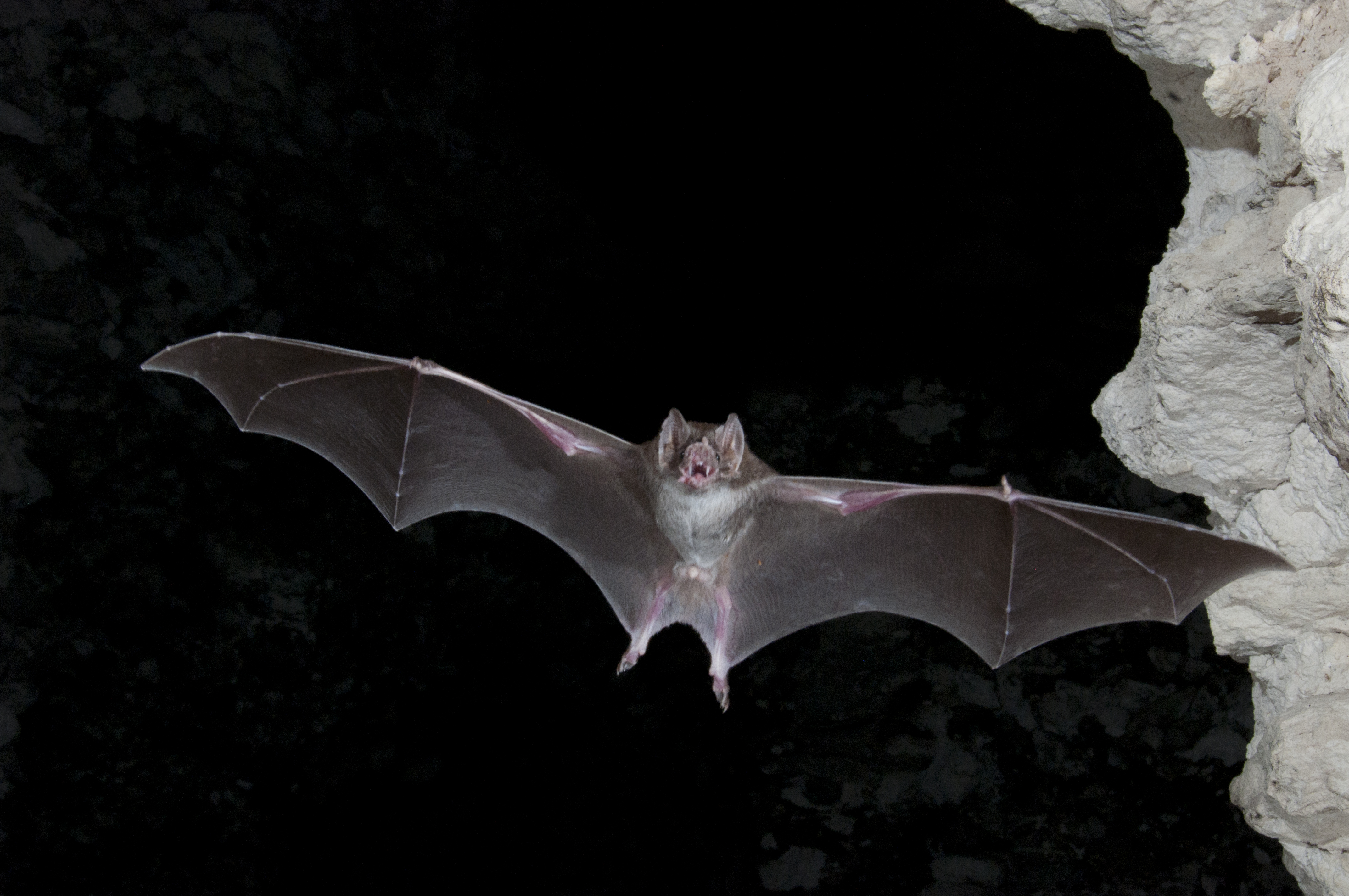 the night life why we need bats all the time