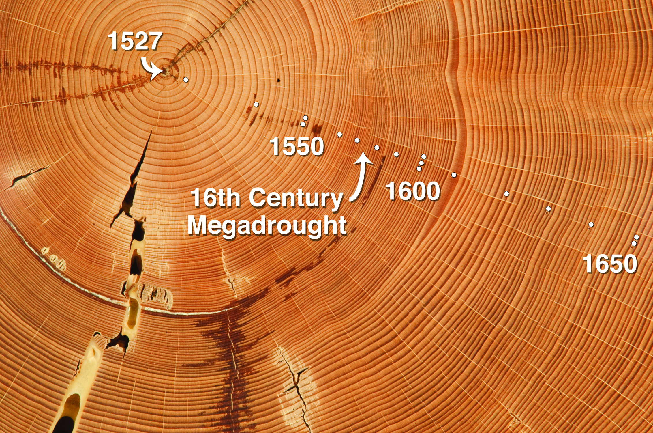 tree rings dating Dendrochronology is the formal term for tree-ring dating, the science that uses the growth rings of trees as a detailed record of climatic change in a region, as well as a way to approximate the date of construction for wooden objects of many types.