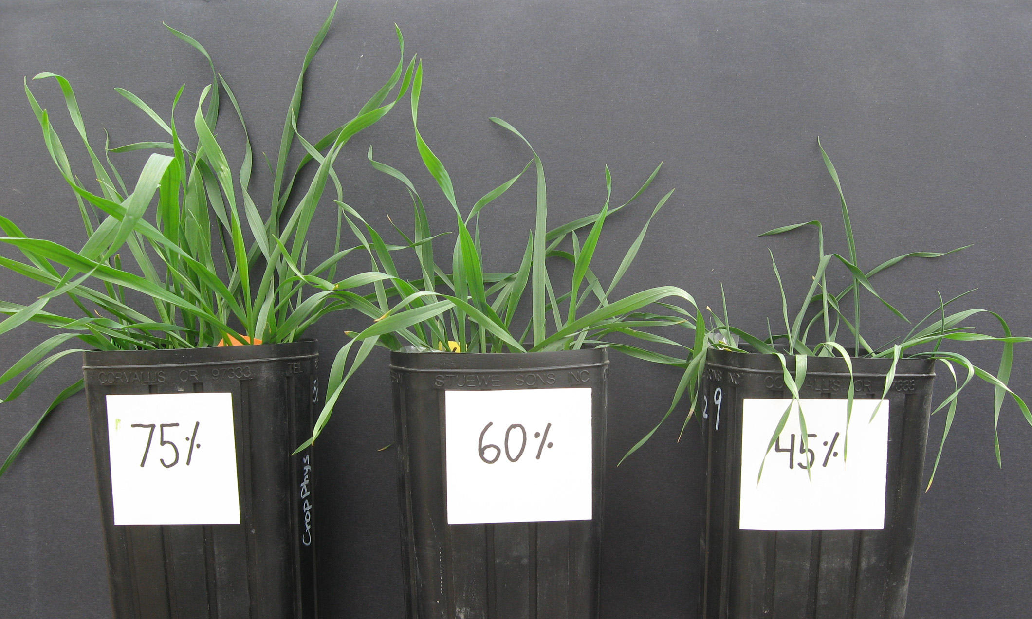 Soil water profile key to wheat root system drought for Soil and plant lab