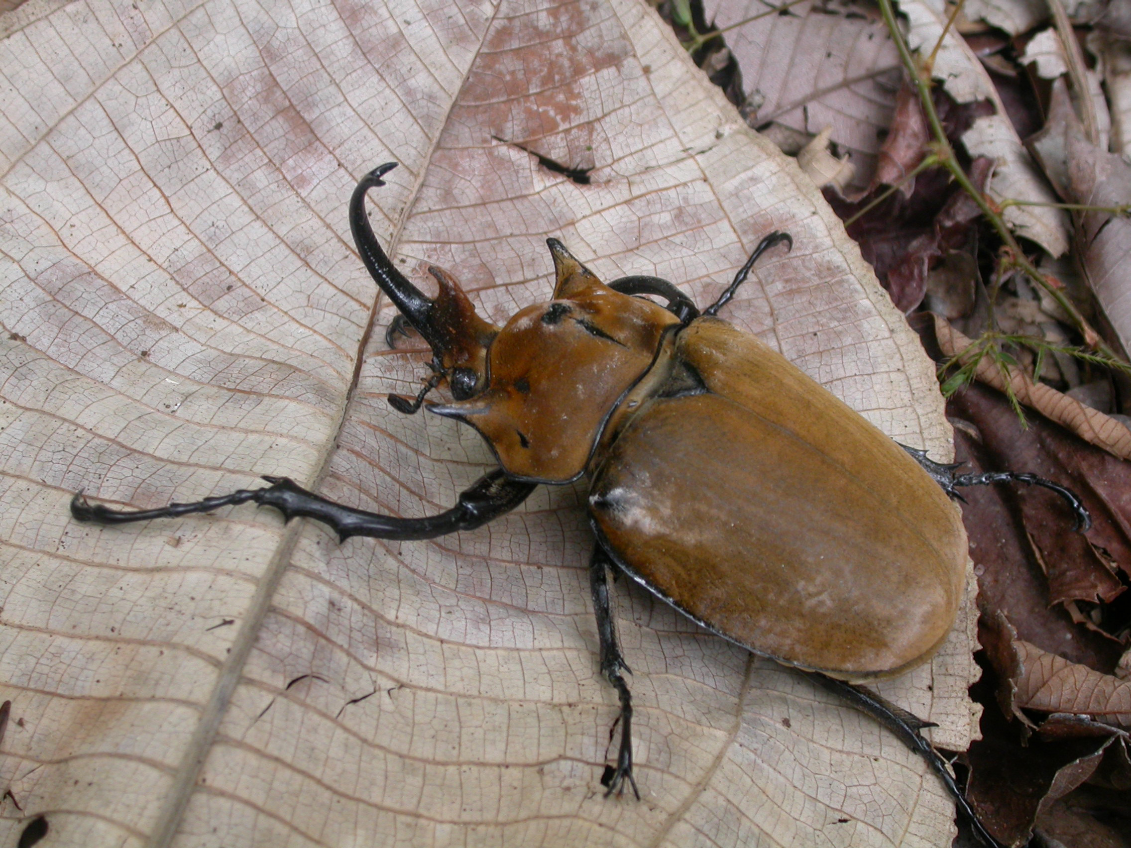 for every species of mammal 300 arthropod species lurk in the