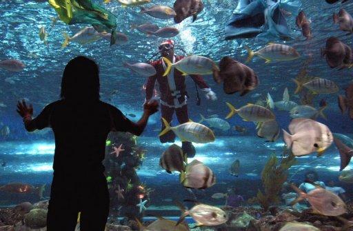 1 500 Aquarium Fish Corals Seized At Manila Pier
